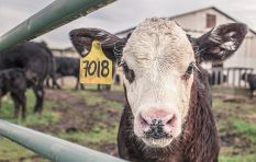 Ban on meat exports 'a big setback' - Agriculture Department