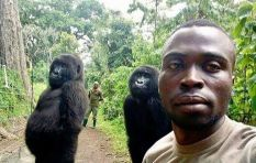 Orphaned gorillas' selfie goes viral