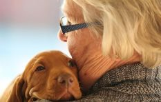 RIPets offers compassionate, dignified pet cremation