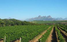 Farmworkers get even bigger cut in Solms-Delta wine estate