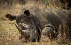 SA to host global convention on illegal wildlife trade
