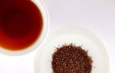 Why rooibos tea price remains high despite improved rains