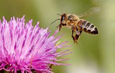 [LISTEN] Bee farmer describes tens of thousands of bees dead in Constantia