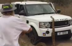 [WATCH] Snake attacks a Land Rover, has social media talking