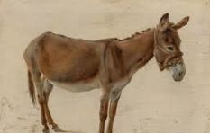 Demand in China leads to barbaric killing of local donkeys