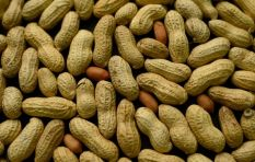 Feed Kids Peanut-Based Products to prevent allergies