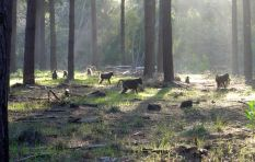 Steer clear of baboons in Tokai forest (and definitely don't feed them) - TMNP