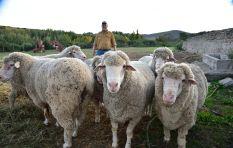 White South African farmers face 'horrific circumstances': Australian MP