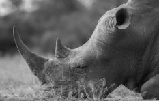 [LISTEN] Environmental Affairs department records decrease in rhino poaching