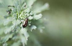 Beetle infestation threatens Johannesburg's trees
