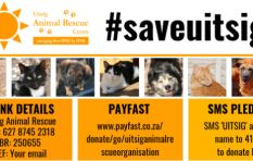 Please help Uitsig Animal Rescue keep its doors open