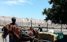 Cape cart horses help reduce poverty and carbon emissions - research