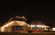 Controversial circus adamant their animals are happy