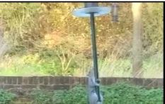 [WATCH] Mom so fed up with squirrels eating bird food that she greased feeder