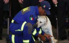 [WATCH] Beloved Mexican rescue dog Frida retires after saving many lives