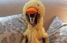 What the quack? Adorable baby goat with anxiety only unwinds wearing duck outfit