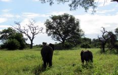 Animals poisoned at Kruger National Park, poachers suspected