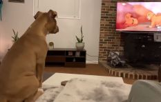 [WATCH] This pooch's reaction to Mufasa dying warms everyone's hearts