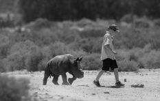 Young SA environmentalist raises R250 000 to create rhino poaching awareness