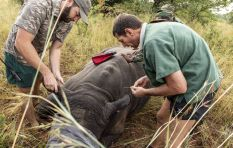 Could lifting the ban on rhino horn trade in SA curb poaching?