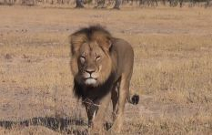 Cecil the lion outshines Obama