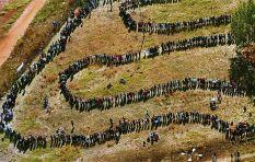 Freedom Day through the eyes of struggle icon Barbara Masekela