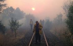 DAFF denies its cut dried pine branches intensified Overberg fires