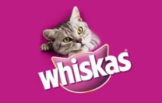 New Whiskas ad is charming and entertaining (even for non-cat people!)
