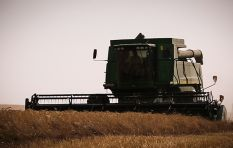 WC needs rain to keep SA's food inflation down, says agricultural economist