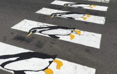 Simon's Town puts unique twist on pedestrian crossings to honour its penguins