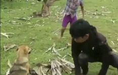 [WATCH] Dog rescued from the clutches of a snake in dramatic video