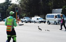 Pedestrians make up 40% of road deaths - AA