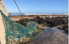 Gansbaai uses Australian stormwater net that went viral last year