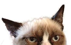 How a cat with a frown earned its owner over R1 billion, or did it?