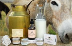 'Serve donkey milk with bit of cocoa and honey...and it's great for your skin'