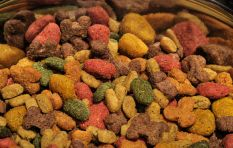 Why you should feed your dog natural raw foods - not pellets