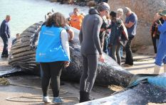 Minister urged to halt exploratory octopus permit after whale found dead