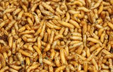Insects aren't just disgusting bugs in your space, they help solve crimes too