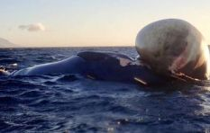 'Watching the whale choke and die on the ropes was horrific'