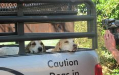 No action taken against dog killers after four months