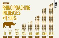 A record number of Rhinos were poached in 2014