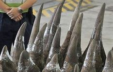Skepticism over new 'fake rhino horn' and its intended effects