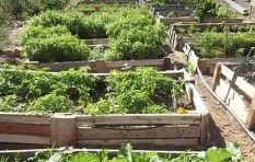 Streetscapes project uses urban gardens to uplift Cape Town's homeless
