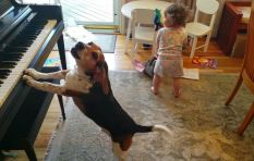 [VIDEO] Doggy sings and plays piano, as his toddler 'sister' dances