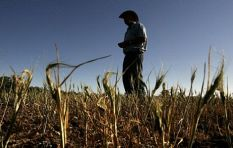 Severe drought in the Western Cape a worry for agriculture sector