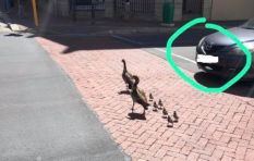 Motorist who killed two goslings has been identified