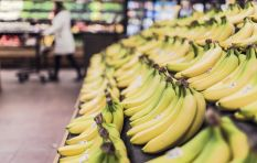 Fungal banana disease won't lead to the extinction of the fruit - expert