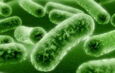 Cleanliness is key to combating listeriosis