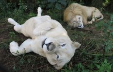 [LISTEN] 'We should be concerned that exotic animals are so easy to buy'