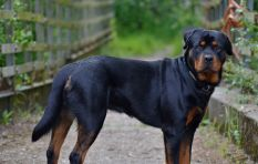 Plea to owners of 'power breed' dogs after child mauled to death